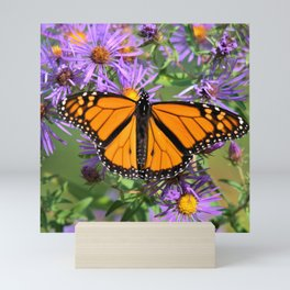 Monarch Butterfly on Wild Asters (square) Mini Art Print