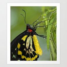 Butterfly Raindrops Art Print