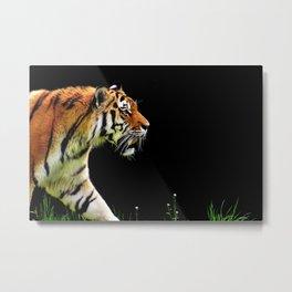 Tiger Predator Metal Print
