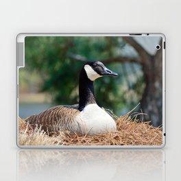 Nesting Canadian Goose Laptop & iPad Skin