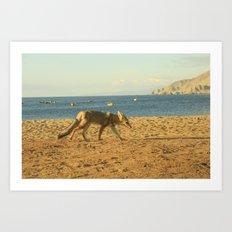Fox on the beach Art Print