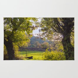 Forest, sunset, art photography at the bulgarian village Lisicite Rug