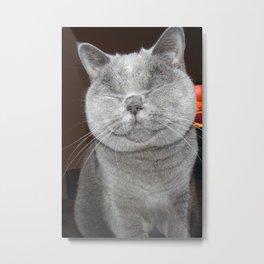 Cat Paparazzi Metal Print