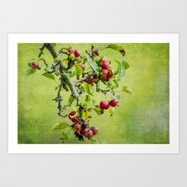 Sweet Crabapple Art Print