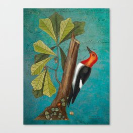 Red Headed Woodpecker with Oak, Natural History and Botanical collage Canvas Print