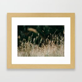 Sunkissed Grass Framed Art Print