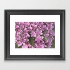 Double Bloom Hydrangea Framed Art Print
