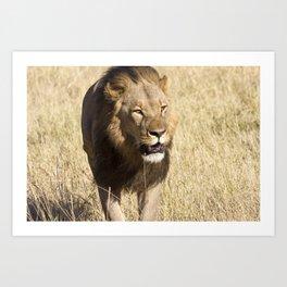 Looking for my Pride II Art Print