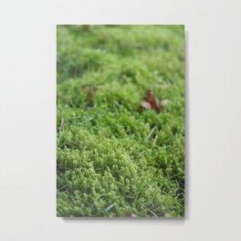 Groundcover Metal Print