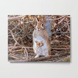 Honey Bunny Metal Print