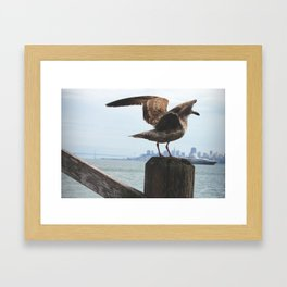 Feathers in the Bay Framed Art Print