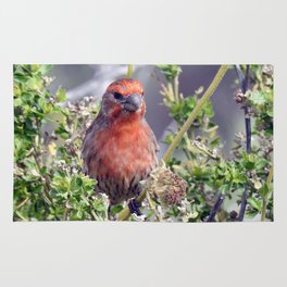 Handsome Male House Finch Rug