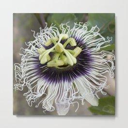 Passiflora edulis flavicarpa Metal Print