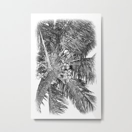 Coconuts on the palm tree in black and white Metal Print
