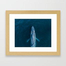 Blue Whale Exhale Framed Art Print