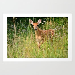 Little Baby Deer Art Print