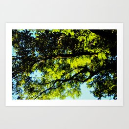Warmth of Your Sun Art Print