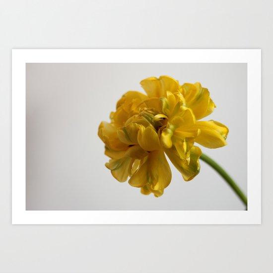 Peony Tulip  - JUSTART © Art Print