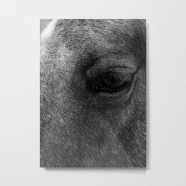 Horse's Eye, UT Metal Print
