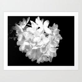 "Hydrangea ""SnowBall"" In Black And White Art Print"