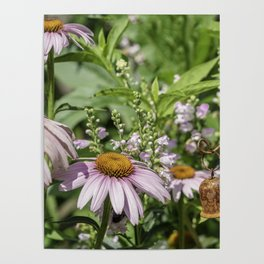 Dance of the Cone Flowers Poster
