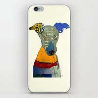 greyhound iPhone & iPod Skins featuring kacy (greyhound  by bri.buckley