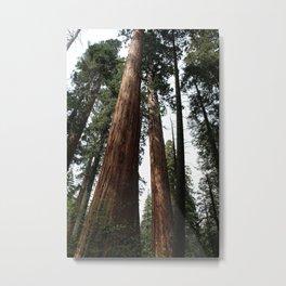 Big Trees Metal Print
