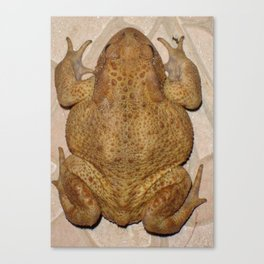 Overhead Anatomy Of a Bufo Bufo Toad Canvas Print