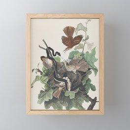 John James Audubon (After) FERRUGINOUS THRUSH (PLATE CXVI) Framed Mini Art Print