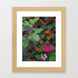 Trellised Garden Framed Art Print