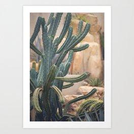 Cactus Jungle II Art Print