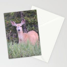 Mr. Curious Stationery Cards
