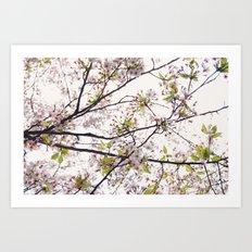 Cherry Blossoms '14 Art Print