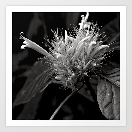 Bizzarre Flower Charm Art Print