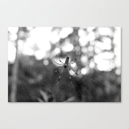 black and white spider Canvas Print