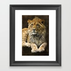 The young lion Framed Art Print