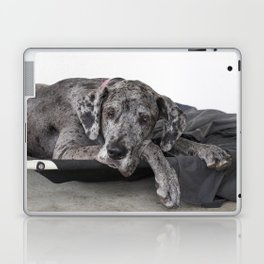 Great Dane waiting Laptop & iPad Skin