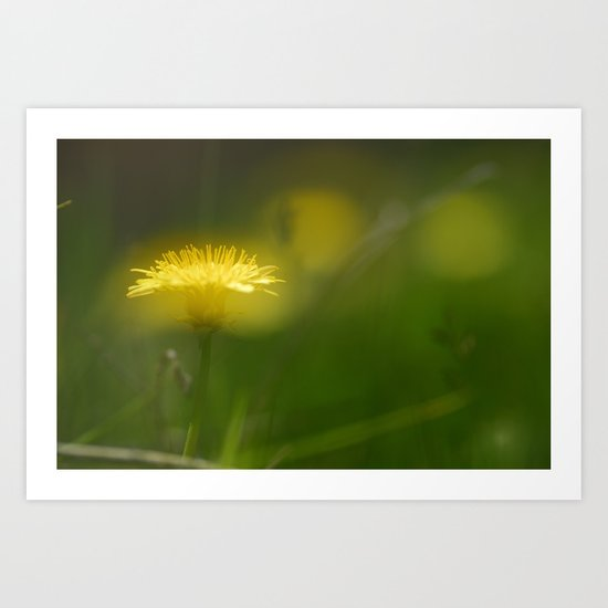 """Mountain light over the flowers"" Art Print"