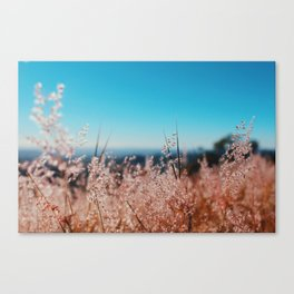 Whispering Grass Turquoise Sky Canvas Print