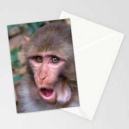 Young Rhesus Macaque with Food in Cheeks Stationery Cards