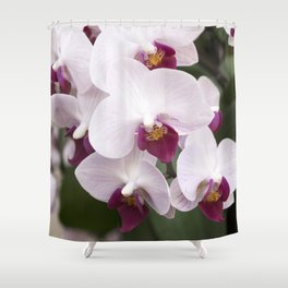Longwood Gardens Orchid Extravaganza 4 Shower Curtain