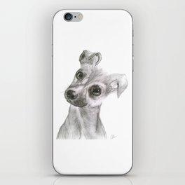 Chihuahua Dog iPhone Skin