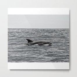 Voir les dauphins Metal Print