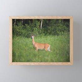 The Doe Pose Framed Mini Art Print