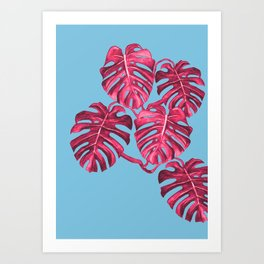 Monstera deliciosa, Swiss cheese plant, tropical, palm Art Print