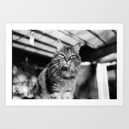 Bitchy Kitty Art Print
