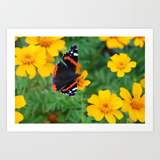 Red Admiral Butterfly on Marigold Art Print