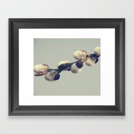 Fluffy gray Framed Art Print