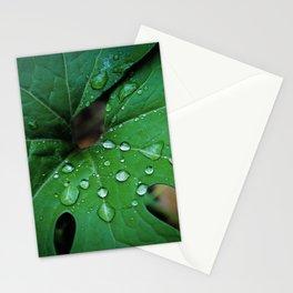 Bloodroot & Raindrops Botanical Fine Art Print, Nature Art, Texture Stationery Cards