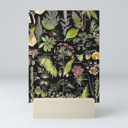 Adolphe Millot - Plantes dangereuses A (dangerous plants A) Mini Art Print
